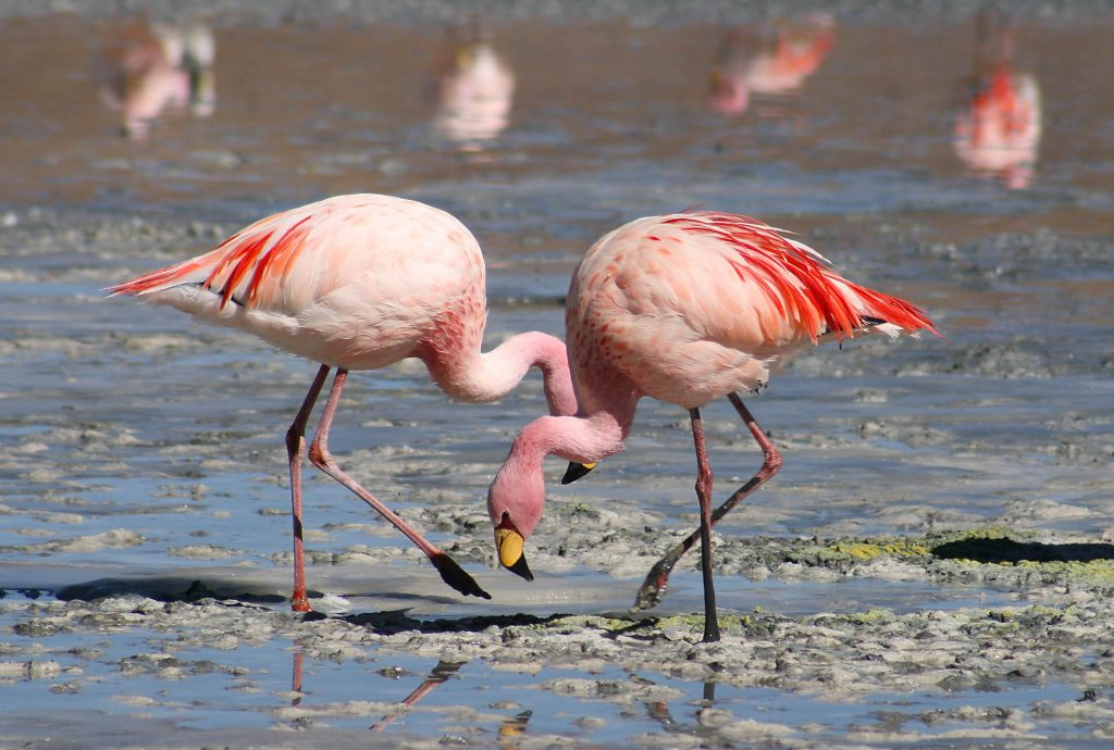 Best Dads in Flamingos