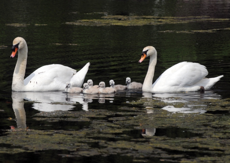 Best Dads in SWANS